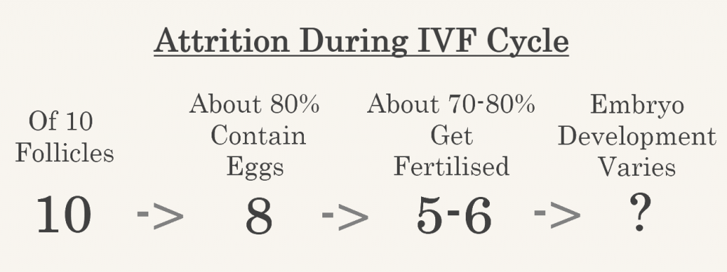 chart showing attrition rates during an ivf cycle