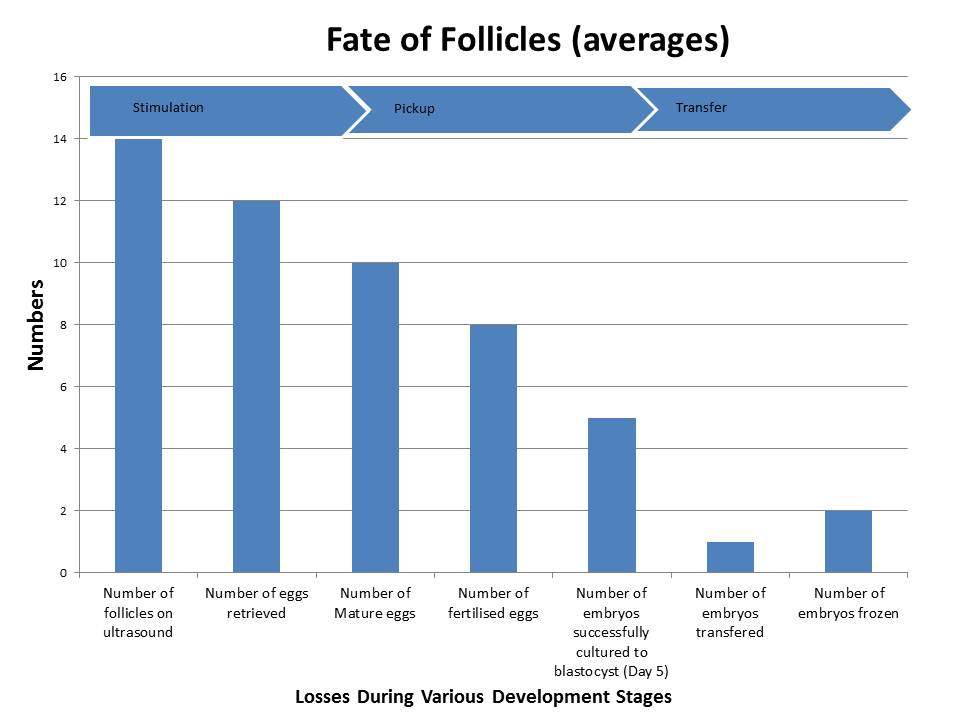 Chart showing the fate of follicles and egg embryos