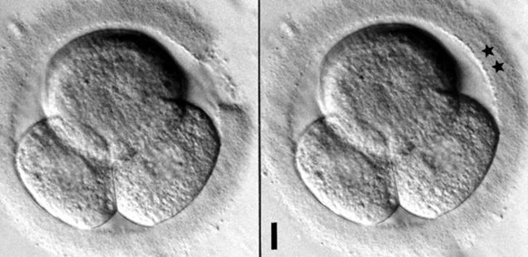assisted hatching of an embryo