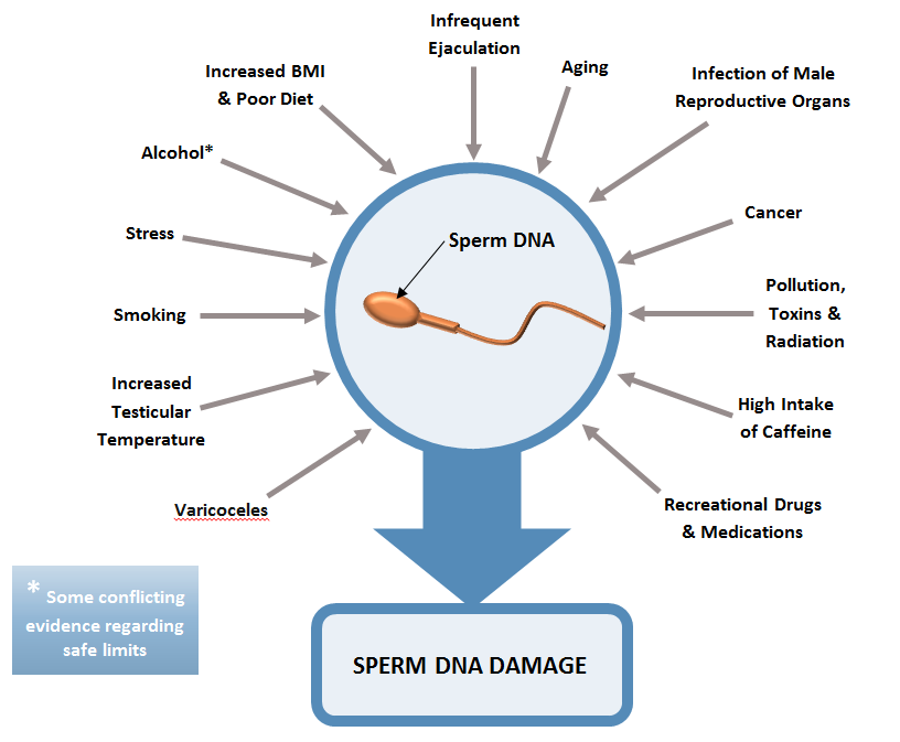 sperm dna damage