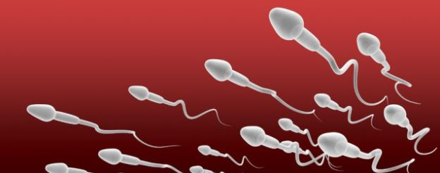 So Your Sperm Morphology is Low – Should You Be Worried
