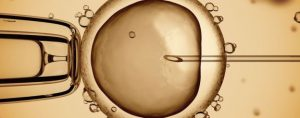 Image of an egg undergoing IVF Treatment