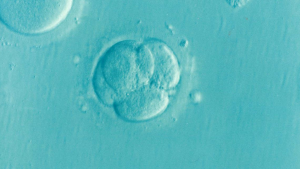 Donation of Embryos and Using Donor Embryos